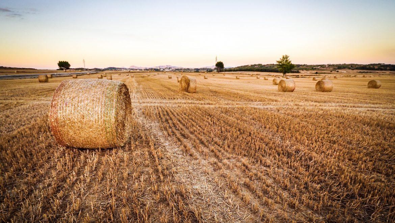 3 כללים חשובים ברכישת שטח חקלאי לבנייה